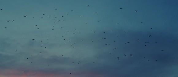 Haapsalu Evening Sky